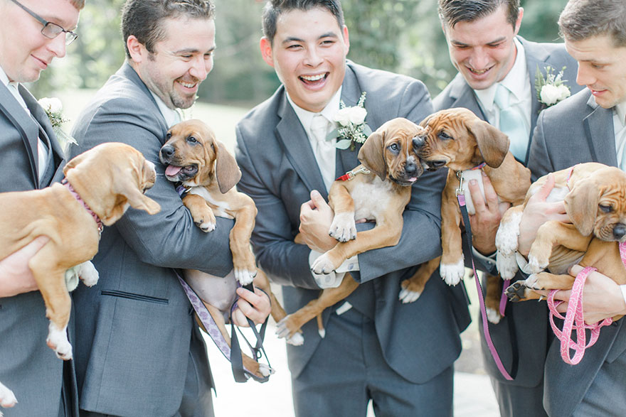 wedding-puppies-instead-flowers-pensylvannia-8