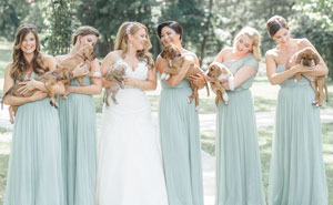 This Wedding Party Had Rescue Puppies Instead Of Flowers To Send A Beautiful Message