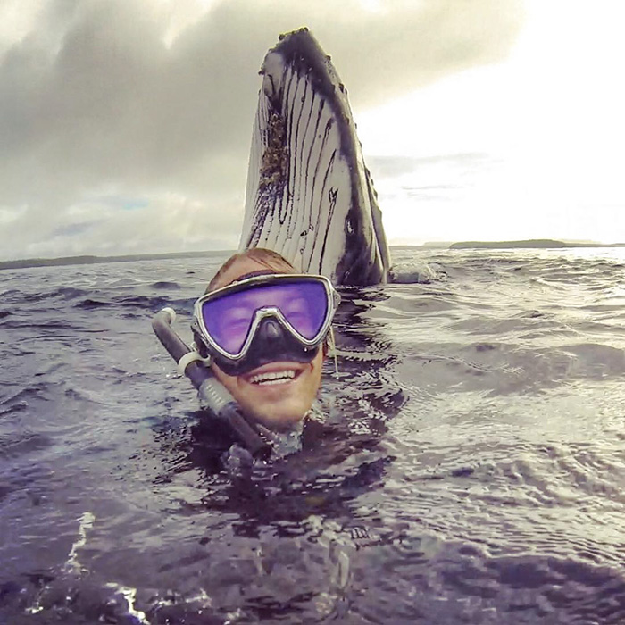 whale-photobomb-diver-will-rosner-australia-7