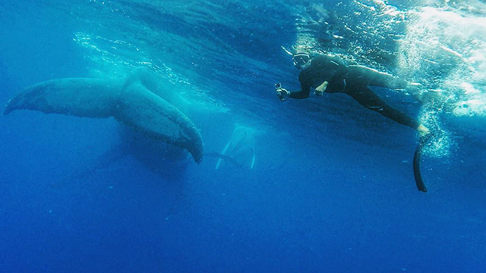 whale-photobomb-diver-will-rosner-australia-8
