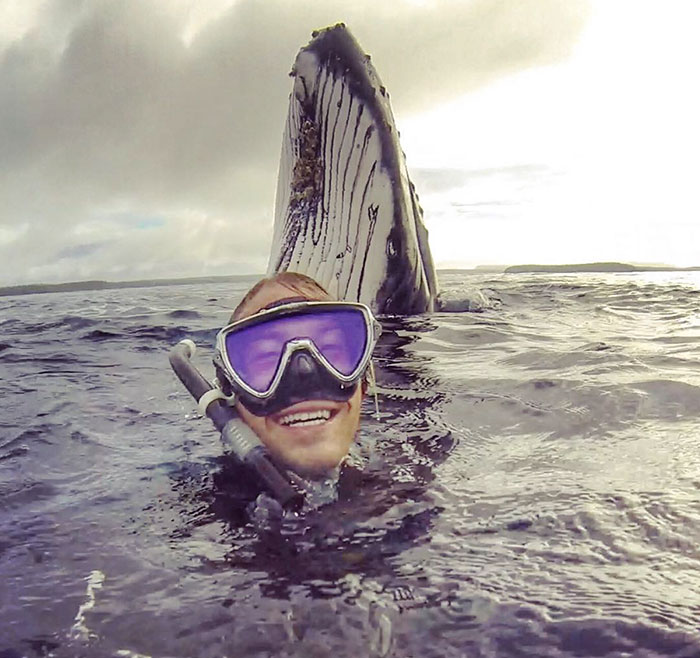 Guy Gets Photobombed By Whale