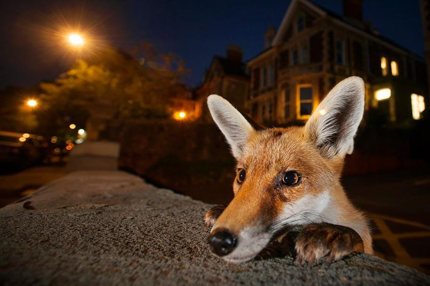 Nosy Neighbour By Sam Hobson, UK