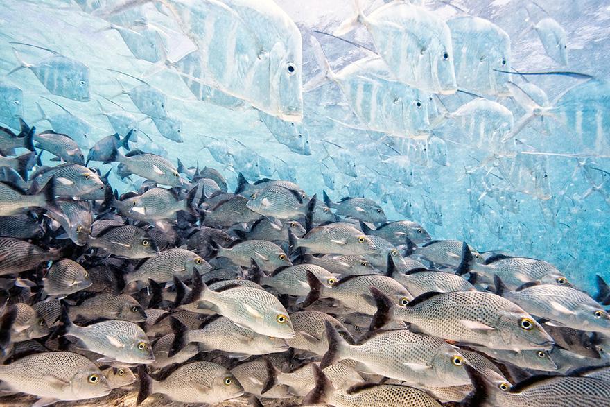 The Disappearing Fish By Iago Leonardo, Spain