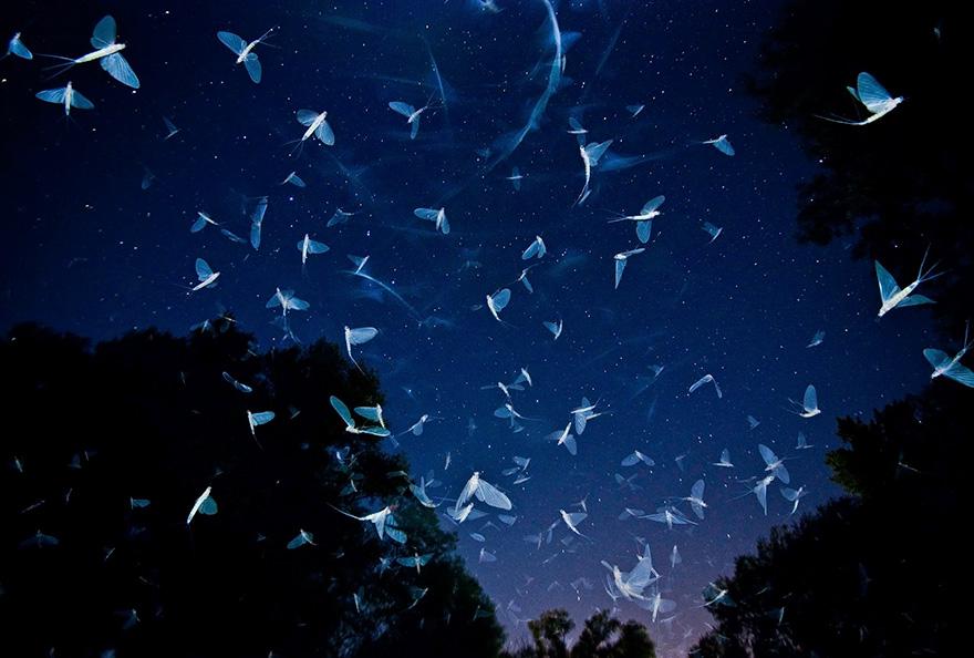 Swarming Under The Stars By Imre Potyó, Hungary
