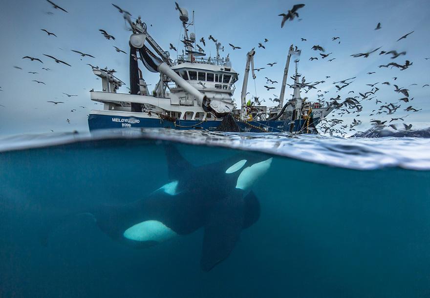 Splitting The Catch By Audun Rikardsen, Norway