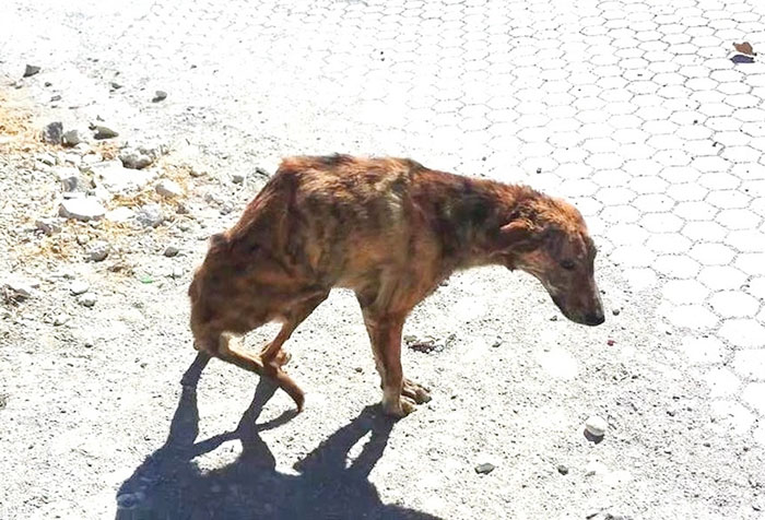 woman-finds-dog-broken-spine-greece-6