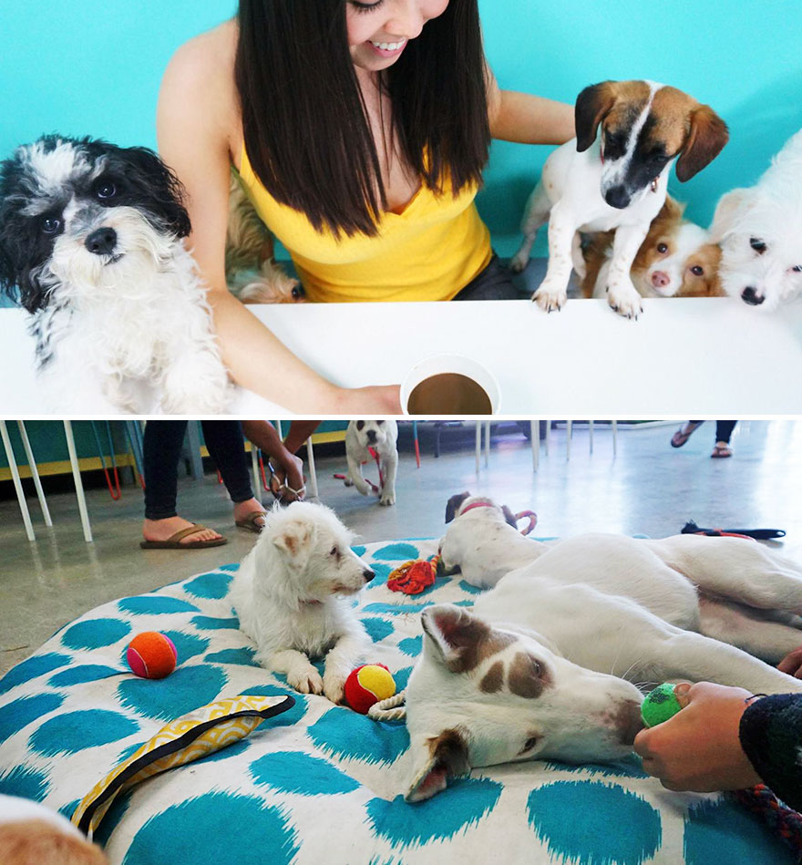 Cafe That Lets Animal Lovers Adopt A Dog While Enjoying A Cup Of Coffee, Dog Cafe, LA, USA