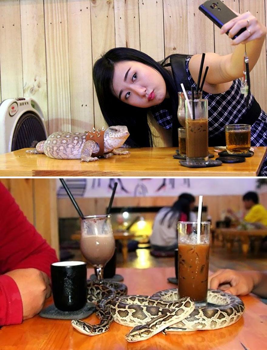 Play With Reptiles While Having A Coffee, Phu Nhuan's Café Babo, Saigon, Vietnam