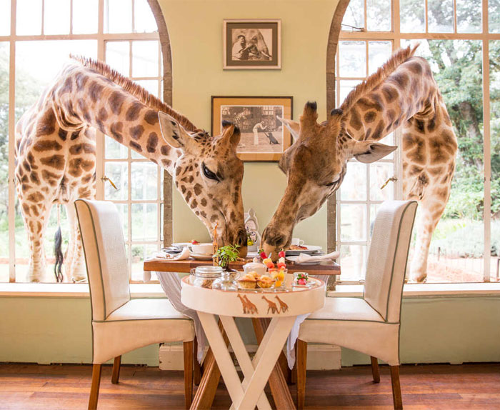 15+ Of The World's Most Amazing Restaurants To Eat In Before You Die