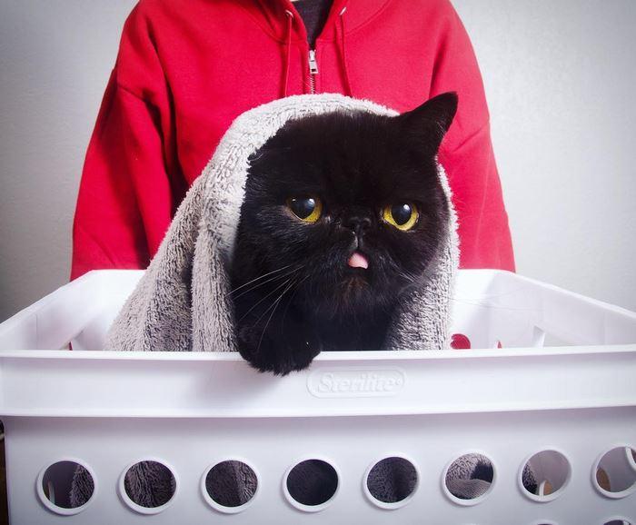 10avocato-costume-willow-squishy-cat-