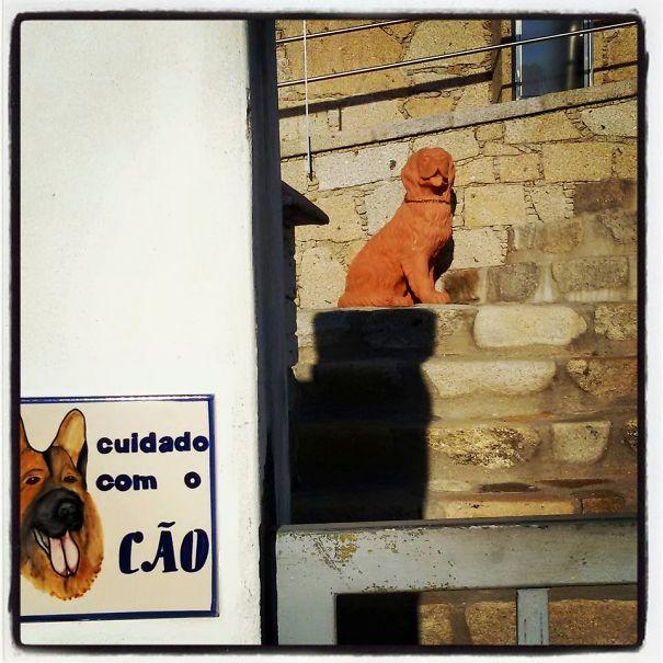 A Very Dangerous Portuguese Dog!