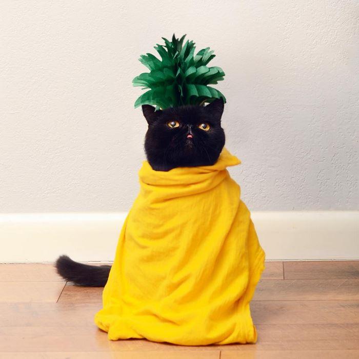 13avocato-costume-willow-squishy-cat-