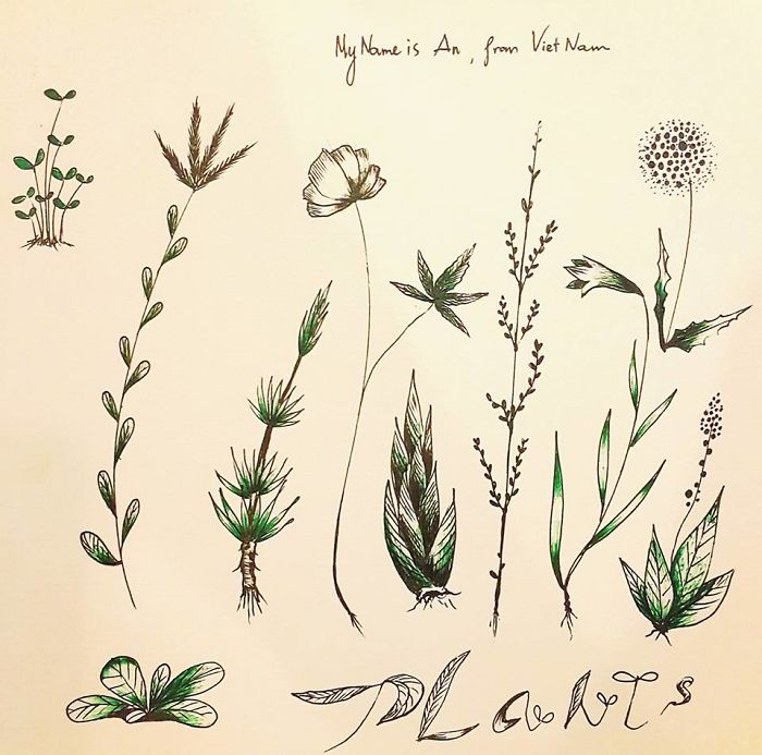 I Draw These Plants After My Running Time