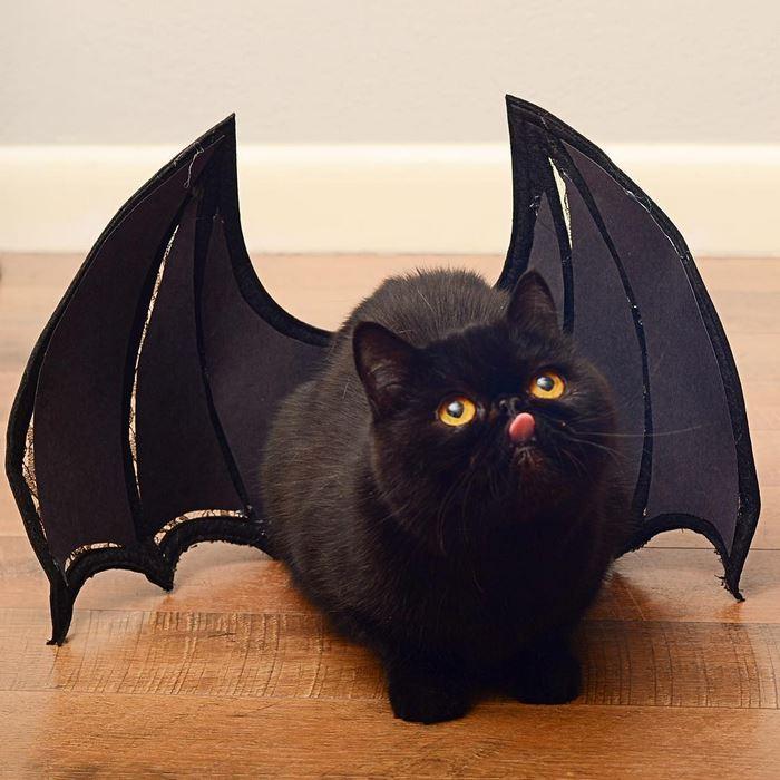 15avocato-costume-willow-squishy-cat-