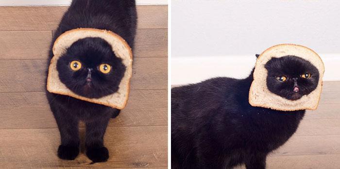 17avocato-costume-willow-squishy-cat-1jpg