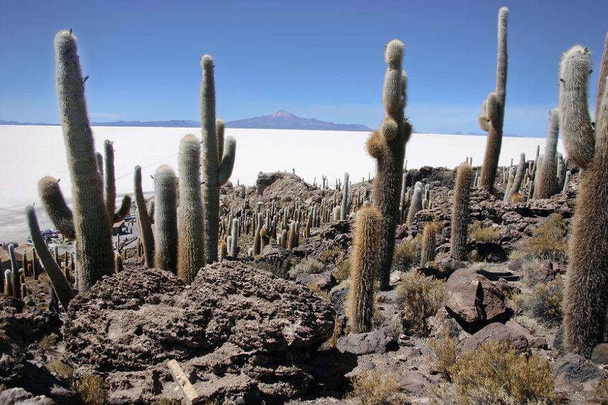 Isla De Pescadores, Salar De Uyuni