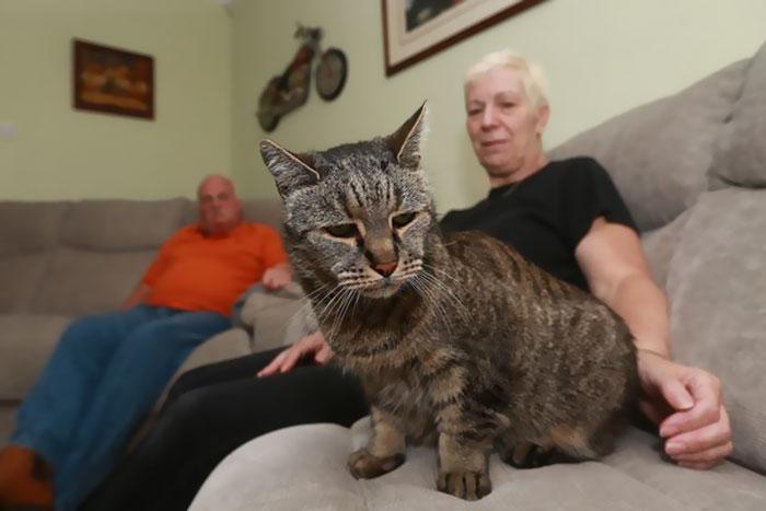 31-year-old-cat-nutmeg-5