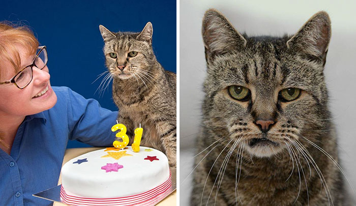 World's Oldest Cat Is 31 And Still Has Many Lives Left