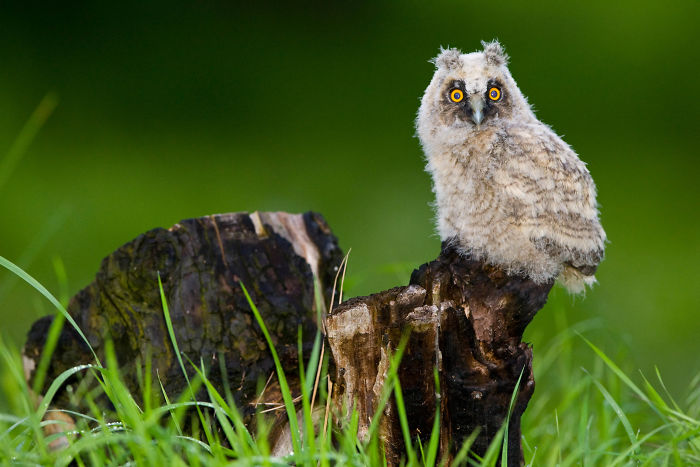 Pictures Of Adorable Baby Owls