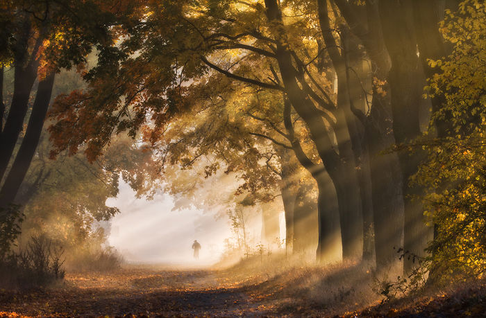 I Visited The Maple Alley In Złoty Potok, Poland To Capture The True Heart Of Autumn
