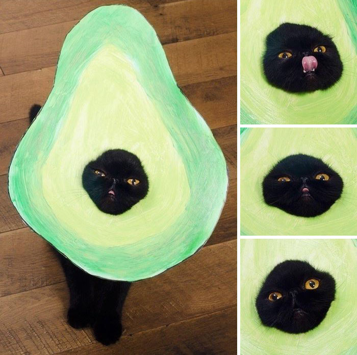 6avocato-costume-willow-squishy-cat-