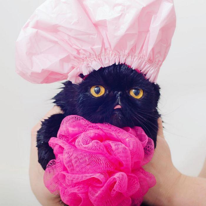 8avocato-costume-willow-squishy-cat-