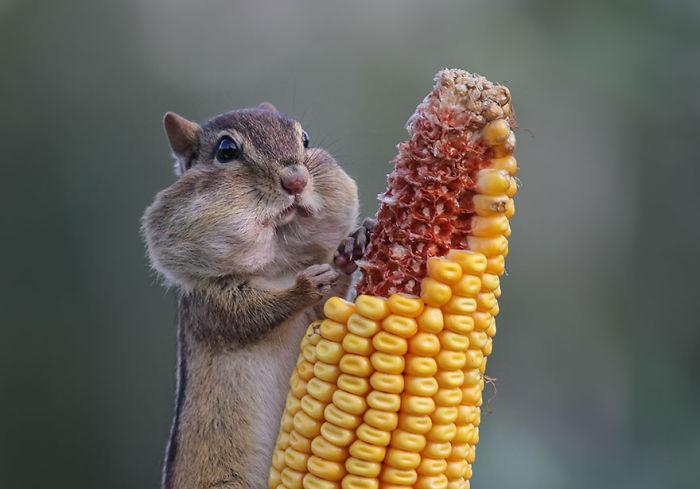 Comedy Wildlife Photo Awards Shortlist