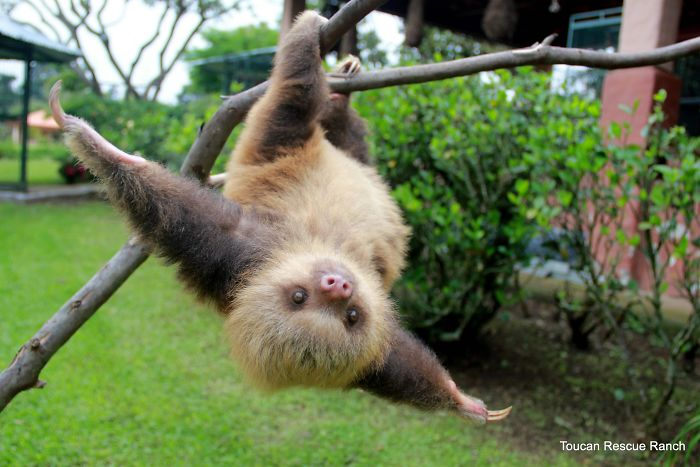 Sloth Pictures 15