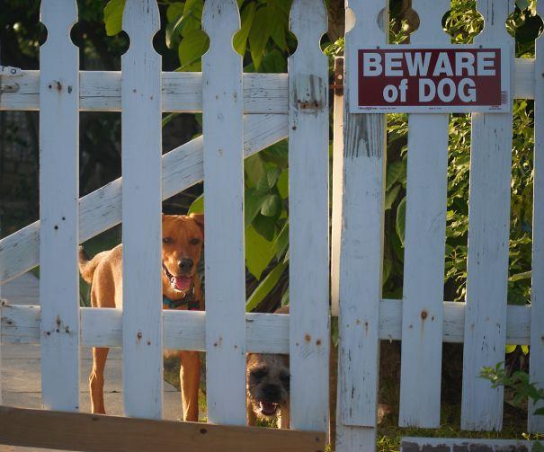Caribbean Pups