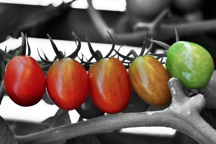 I Like Perfect Tomatoes