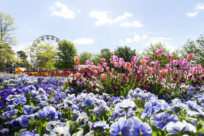 Floriade Is Australia's Biggest Celebration Of Spring