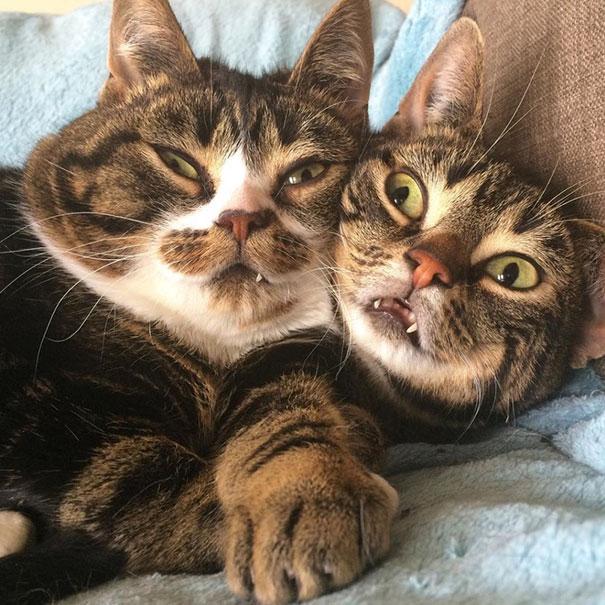 Elfie & Gimli