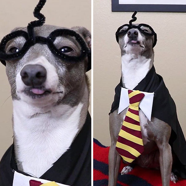I Think He Likes Being A Wizard