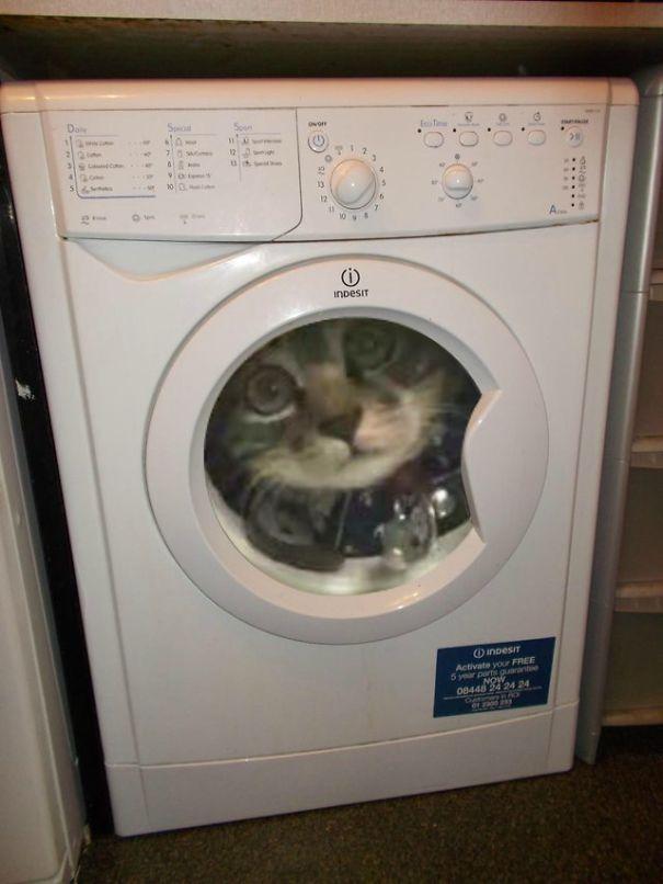 Giant Washing Machine Cat