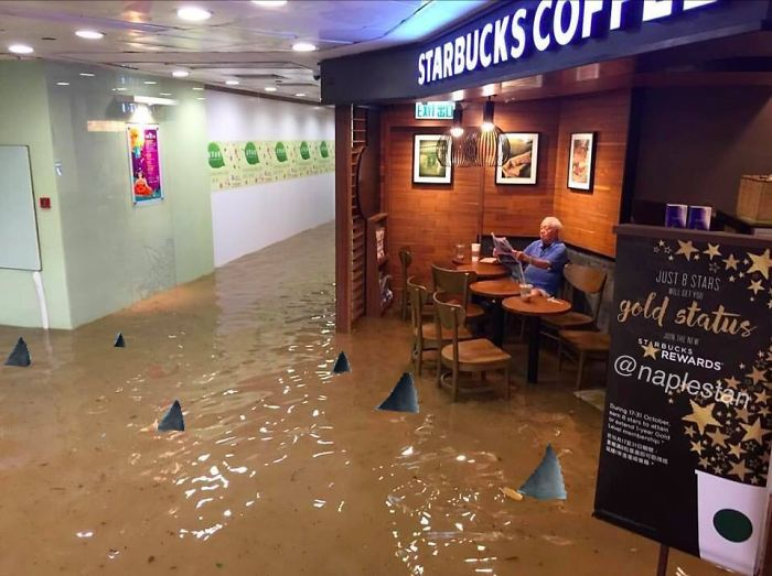 Starbucks Flood, Sharks In The Hall.
