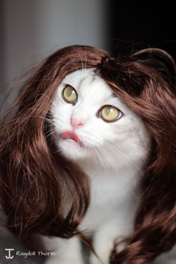 Sexy Cat-women