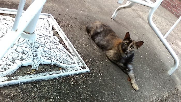 Meet Smokey And Charlie: House Cat Vs Street Cat