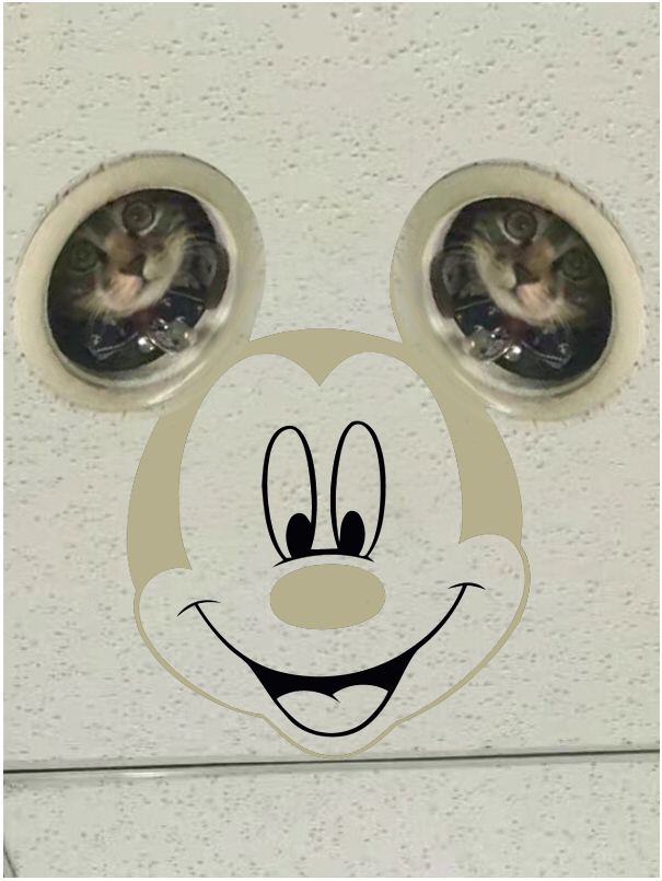 Micky-cat