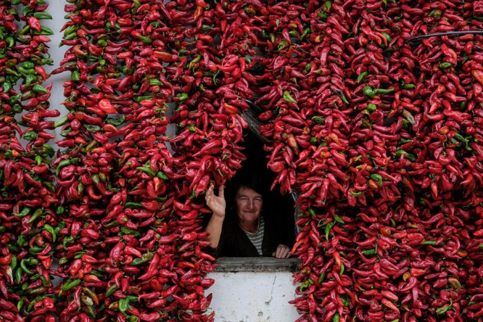 Paprika Capital Of The World: Serbia