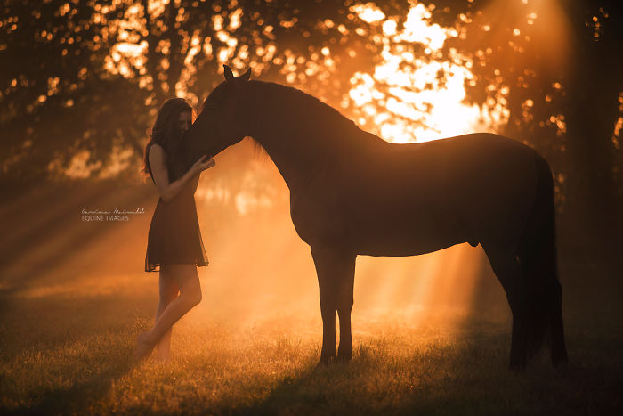 Photographer Shows Rare Horse Moments And Captures Their Unique Character
