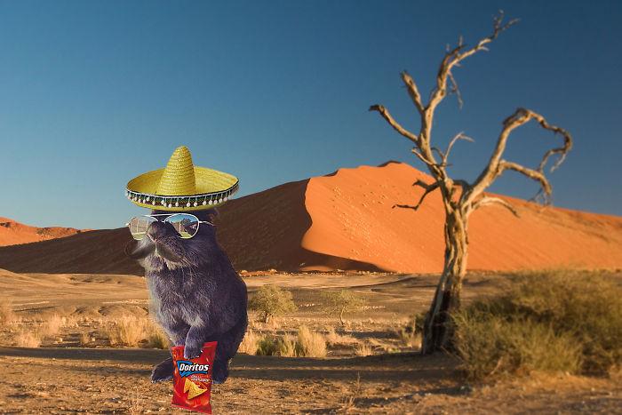 #mexican Bunny