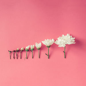 This Photographer Turns Flowers And Leaves To Art Objects