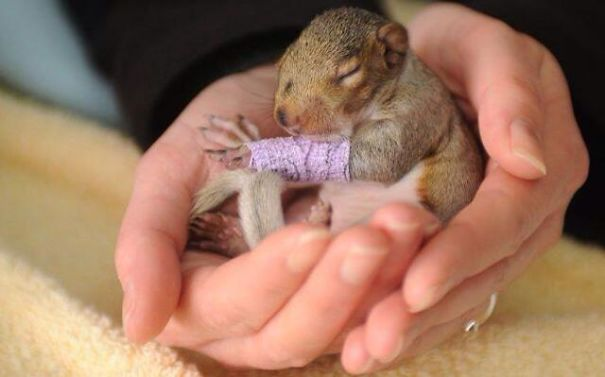 Tiny Squirrel With A Cast After His Broken Leg