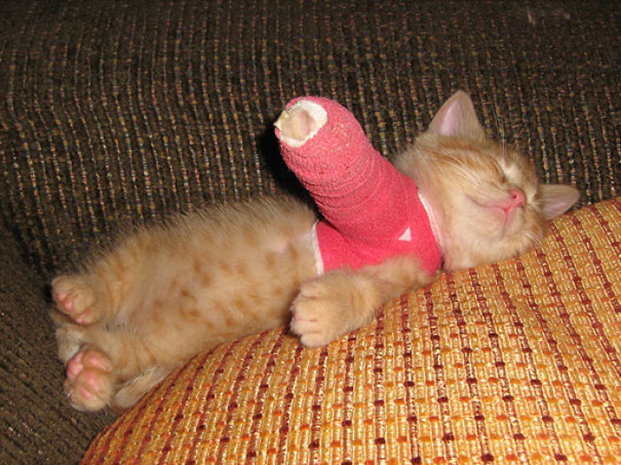 Tiny Kitten In Cast