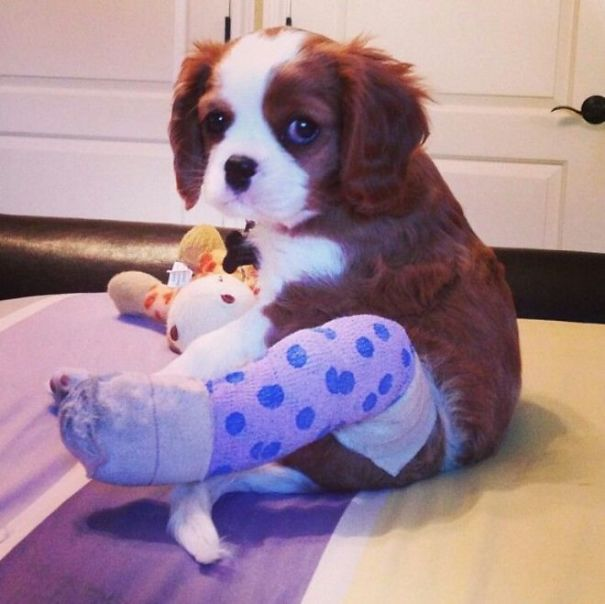Puppy In Cast