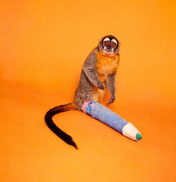 Howling Monkey (Broken Leg)
