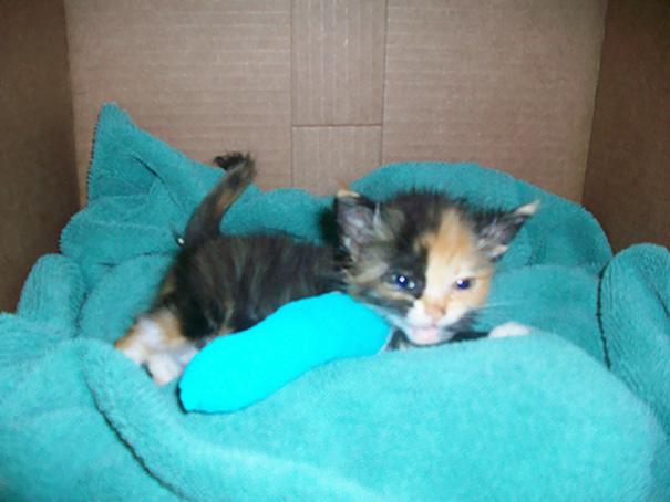 Tiny Kitten In Cast