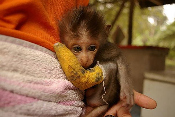 Monkey In Cast