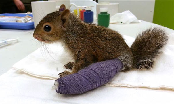 Tiny Squirrel In Cast