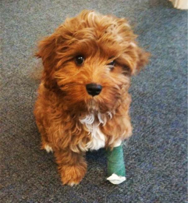 Little Doggy In Leg Cast